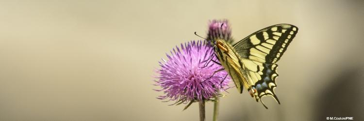 image illustration_accueil_biodiversite.jpg (0.1MB)