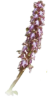 image orchidee.png (48.6kB)