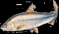 image poisson.png (69.6kB)